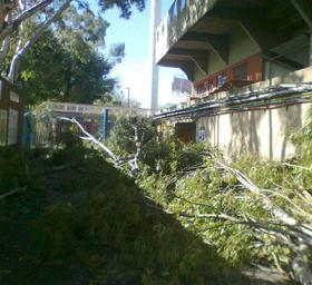 Un buen número de árboles de gran tamaño cedieron por los fuertes vientos del temporal.