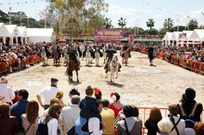 Exhibición hípica de caballos andaluces.