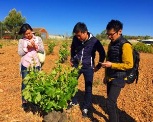 Participantes en la delegación japonesa en la visita a los terrenos de una bodega.