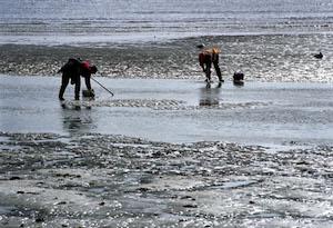 El paro bajó en todos los sectores (en la imagen, mariscadores en una playa).