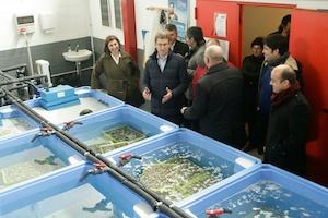 El presidente de la Xunta, Alberto Núñez Feijóo, visitó las instalaciones de la lonja de Noia.