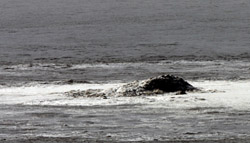 Burbujas de gas y espuma captadas el día 8 por la erupción volcánica submarina de La Restinga, en El Hierro.