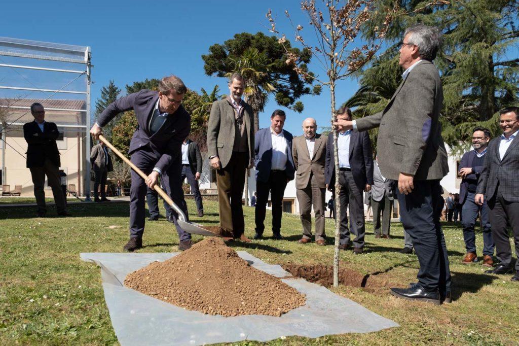 El presidente de la Xunta, Alberto Núñez Feijóo, plantó un árbol en presencia del Rey durante su visita a Boqueixón.