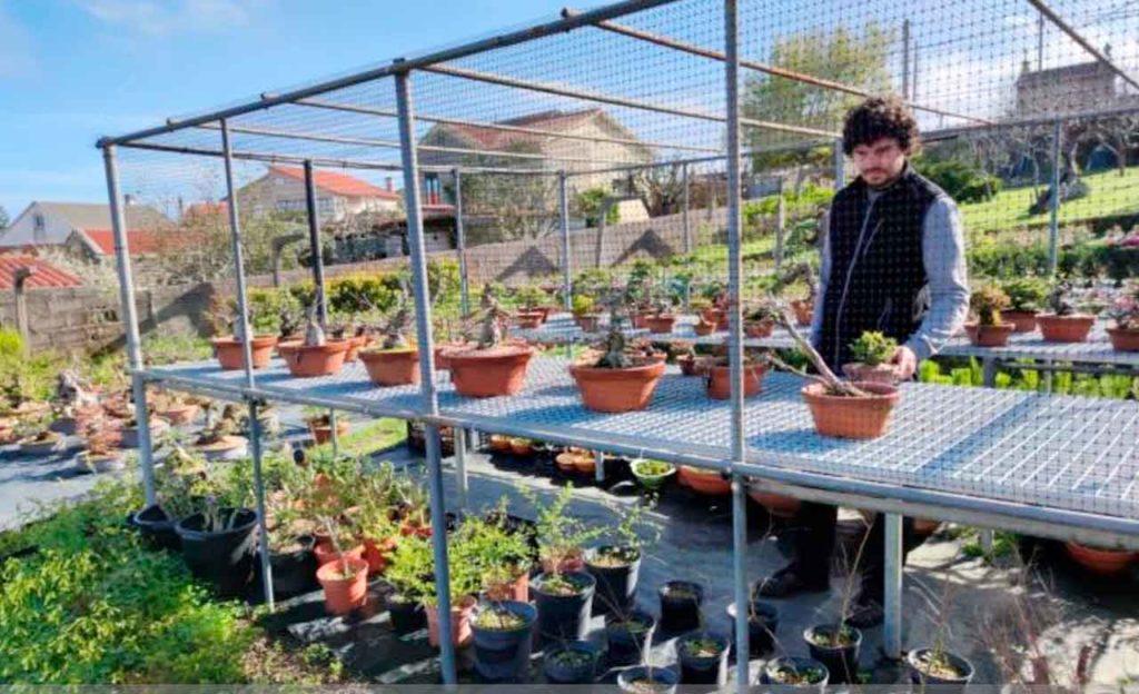 Foto de archivo de uno de los negocios, un vivero de plantas, puestos en marcha con el apoyo de las ayudas al retorno emprendedor de la Secretaría Xeral da Emigración.